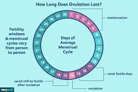 How Long Does Ovulation And Your Fertile Window Last