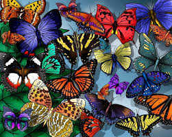 1920 X 1080 Butterfly Backgrounds ...