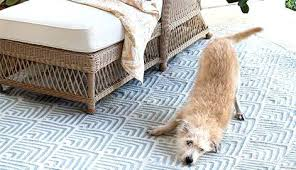 pet friendly area rugs picking the perfect rug durable