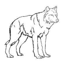 Small Picture realistic wolf coloring pages Story Stone Ideas Pinterest Wolf