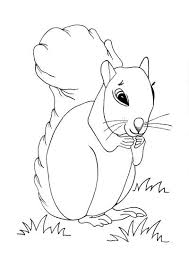 Cute Squirrel Coloring Page Allfreekidscraftscom