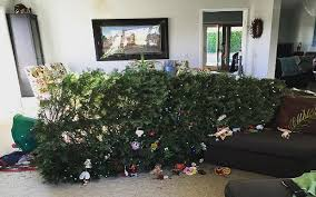 Are These The Worst Ever Christmas Tree Efforts Twitteru0027s Worst Christmas Tree