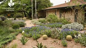 wildflowers and drought design rollingwood city hall central