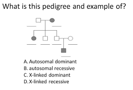 Solved What Is This Pedigree And Example Of Autosomal Do
