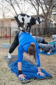 goat yoga richardson plano