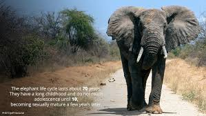 Elephant Quotes Adorable Elephant Quote Quote Number 48 Picture Quotes