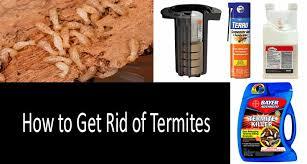 Getting Rid of Termites: photo