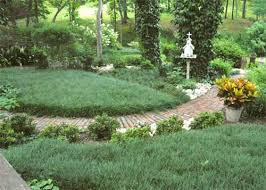 dog friendly ground cover.  Cover To Dog Friendly Ground Cover