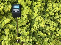 Plant Moisture Meter Chart Take The Guesswork Out Of Watering With A Moisture Meter