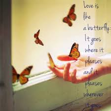 Butterfly Quotes Awesome Cute Butterfly Quotes About Life Butterfly Pictures