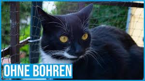 Balkon Unprofessionell Katzensicher Machen Ohne Bohren Youtube