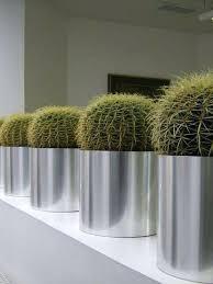 office plants for sale. Fine Plants Indoor House Plants Sale Providing A Range Of Including  Office And On Office Plants For Sale E