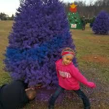 Christmas Tree Buying Guide  How To Score The Perfect Christmas Christmas Tree Cutting Nj
