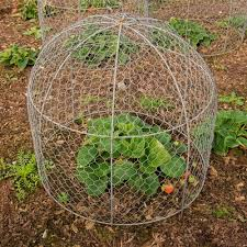 diy garden cloche to protect young new