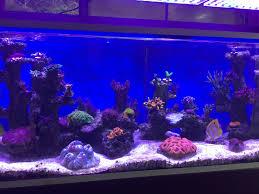 reef aquarium led light orphek