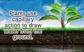 Examples That Explain The Concept And Meaning Of Capillary