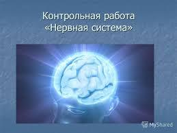 Презентация на тему Контрольная работа Нервная система  1 Контрольная работа Нервная система