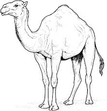 Small Picture Camel Coloring Page Camels Coloring Pages Free Coloring Pages