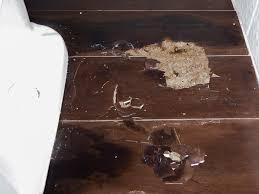 laminate flooring termite damage photo credit the local guys