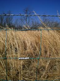 wire farm fence. Did You Know, April Is The Peak For Monthly Internet Searches \u201cfarm Fence\u201d? Maybe It\u0027s Because So Many People Are Getting Spring Fever And Making Their Wire Farm Fence