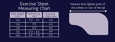 Choosing An Exercise Sheet
