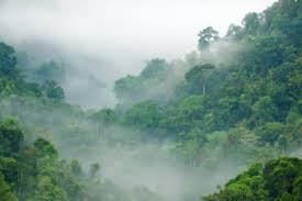 tropical rainforest raining. Perfect Tropical Rainforest Inside Tropical Rainforest Raining O