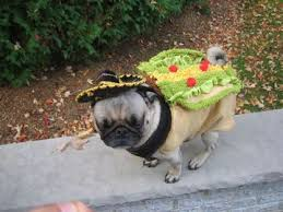 pug in taco costume. Simple Taco She Was So Hungryshe Could Have Eaten Herself With Pug In Taco Costume