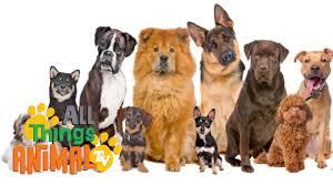 DOGS: Animals for children. Kids videos. Kindergarten | Preschool learning  - YouTube
