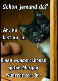 Lustige Sonntag Morgen Sprüche Bilder Und Sprüche Für Whatsapp Und