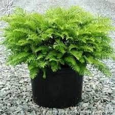Healthy plants should be transplanted from nursery pots to containers that  are a few inches wider and deeper. The best shrubs in container gardens are  ...