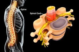 Sometimes, pain from other organs in your abdomen can radiate to your left side and can feel as if your left hip is sore. Common Spine Problems Explained With Pictures