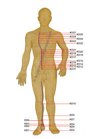 Kidney Meridian Acupuncture