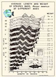 Largemouth Bass Age Chart Mels Place Com Striped Bass Growth Rate Chart Bass