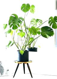 best indoor trees lighted low light office plants illuminated artificial nz