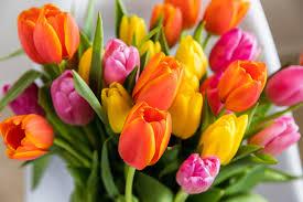 Popular Spring Flowers | 1-800-Flowers Blog