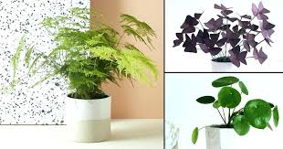 decoration household plants poisonous to cats uk
