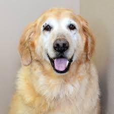 dodge dog breed. dodge is a happy boy dog breed e