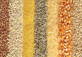 Refined Grains Study Touts Benefits Of Replacing Refined Grains With Whole Grains