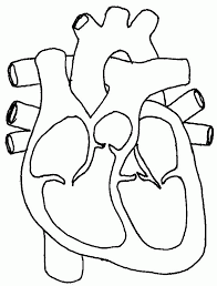 Small Picture Human Heart Coloring Pages 205 Free Printable Coloring Pages