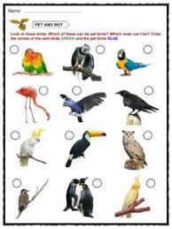 Birds Chart For Kindergarten Bird Facts Worksheets Habitat Diet Information For Kids