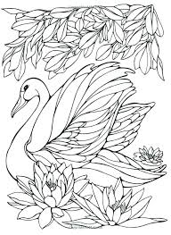 swan coloring page gallery of swan coloring pages lovely coloring page nature around the house nature swan coloring page