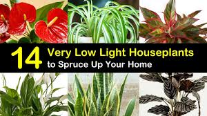 Extremely Low Light Plants 14 Very Low Light Houseplants To Spruce Up Your Home