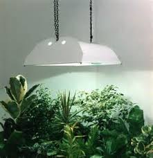 room plants x:  best lights for indoor plants  indoor plant grow lights