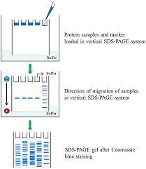 introduction to page sigma aldrich