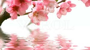 Картинки по запросу цветы над водой