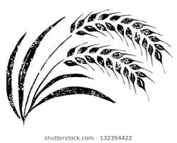 rice plant drawing.  Plant Handdrawn Rice Throughout Rice Plant Drawing U