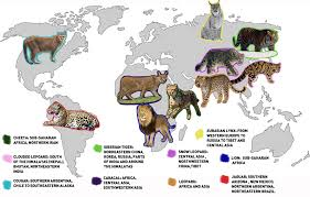 Top 10 Biggest Cats Earth Rangers Wild Wire Blog
