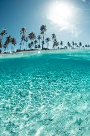 Beautiful Paradise Quotes Best Of 24 Warm And Sunny Beach Quotes Palm Paradise And Beach