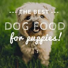 10 Best Dog Foods For Puppies 2019 Reviews Top Dry Wet