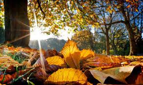 """Результат пошуку зображень за запитом """"autumn"""""""